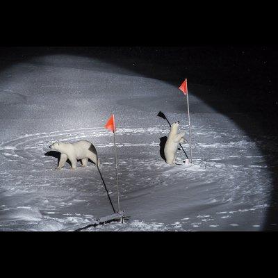 Esther Horvath, POLARNIGHT, Un orso polare e il suo cucciolo si avvicinano alle apparecchiature posizionate dagli scienziati della Polarstern, nell'Oceano Artico centrale. 10 dicembre 2019
